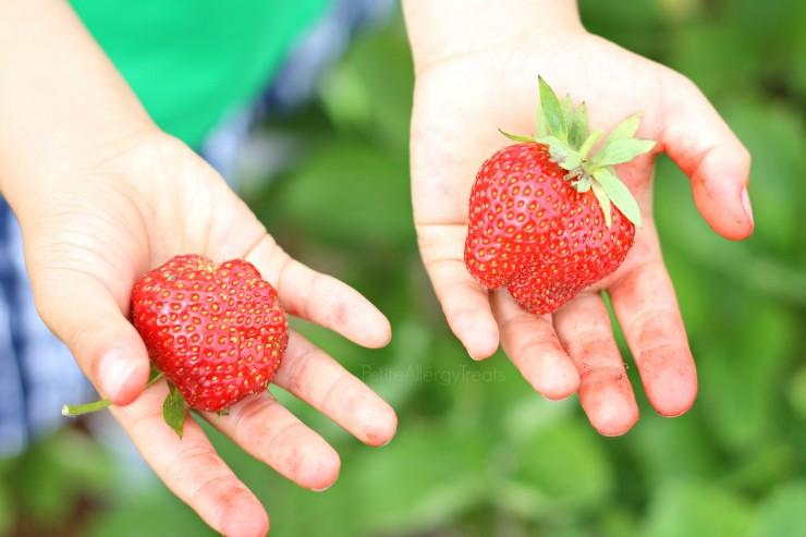 StrawberryPicking-PetiteAllergyTreats